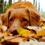 Seasonal Allergies and Your Pet